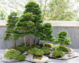 Bonsai Exhibition Garden The North Carolina Arboretum