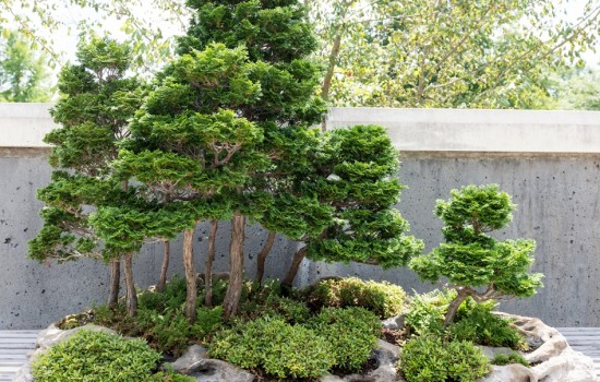 Bonsai Exhibition Garden