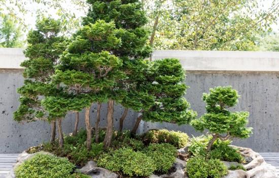 Bonsai Exhibition Garden