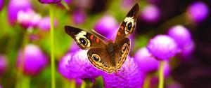 Butterfly_webhero