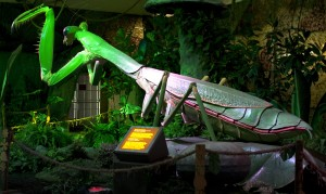 TheWorldofGiantInsects_Mantis