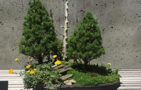 A tray bonsai recalls the Mt. Mitchell landscape in the Bonsai Exhibition Garden.