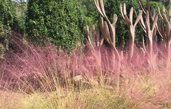 One of the most colorful and show stopping fall blooming grasses is Muhlenbergia capillaris or Muhly grass. The airy flower plumes glow in the sunlight alongside the artwork titled Hedge Against Extinction by Martin Webster.