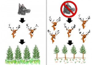 WildSurvival_ecology