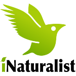 ecoEXPLORE_inaturalist
