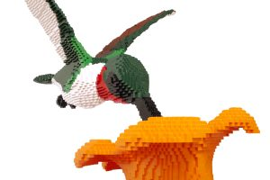SeanKenney_hummingbird