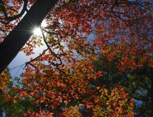 fallleaves_rickdaley