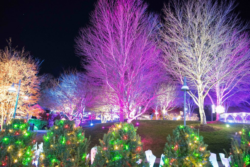 View Gallery - Winter Lights - The North Carolina Arboretum